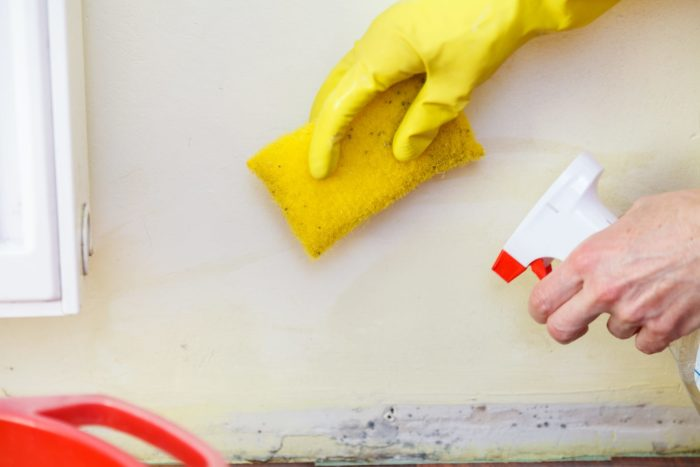 How to Test for Mold-Palm Beach Water Restoration Services-We do home restoration services like Servpro such as water damage restoration, water removal, mold removal, fire and smoke damage services, fire damage restoration, mold remediation inspection, and more.